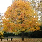 automne-4