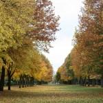 automne-6