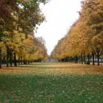 automne-7